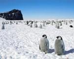Почему пингвины не летают? - фото