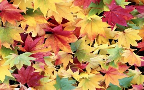 Почему листья желтеют? - фото