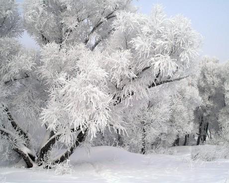 люблю зиму