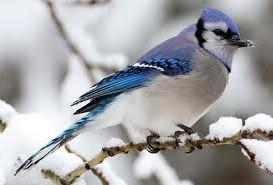 Почему птицы поют? фото