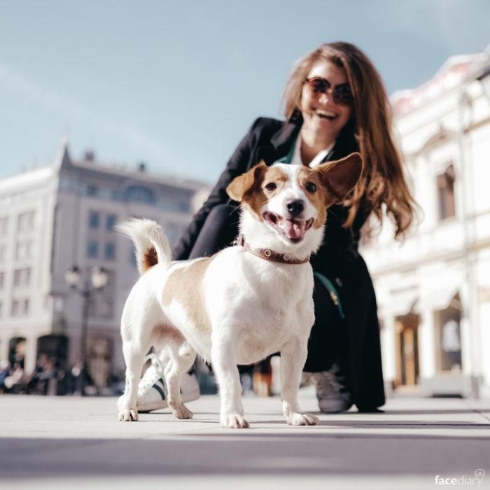 Почему люди заводят собак? фото