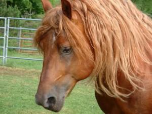 Почему косметику тестируют на животных? фото