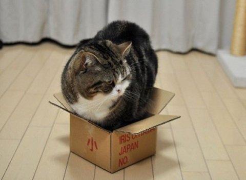 Почему кошки любят коробки? 4 прчины. фото