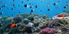 Underwater life in beautiful coral reef, Red Sea