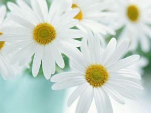 Почему дома плохо растут цветы? фото