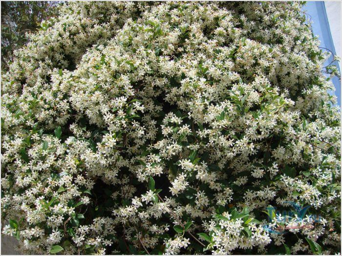 Почему цветы пахнут? фото