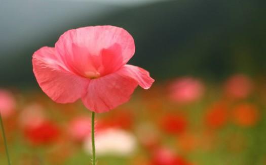 Почему аромат цветов чувствуется на расстоянии? фото