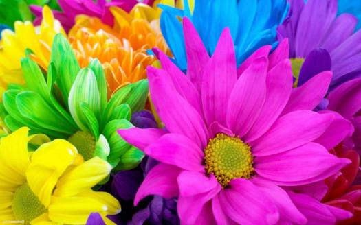 Почему цветы разноцветные? фото