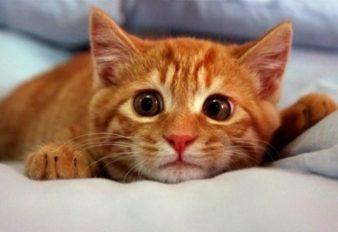 кошка-гадит-на-кровать