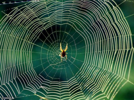 К чему снится паутина? фото