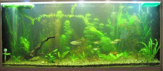 Почему вода в аквариуме мутнеет? - фото