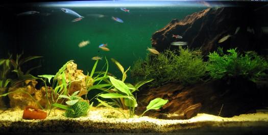 Почему аквариум нуждается в постоянном уходе? фото