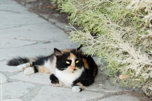 Почему на Кипре много кошек? - фото