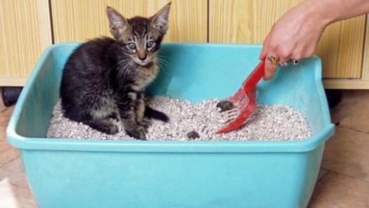 Как приучить котенка к лотку? фото