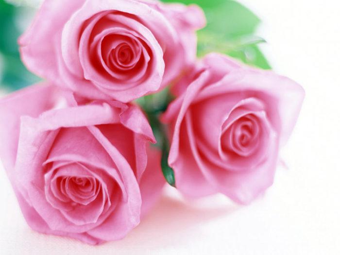 цветы в Ижевске