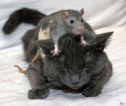 Как вывести мышей из квартиры? фото
