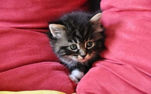 Почему кошки любят спать на кровати? фото
