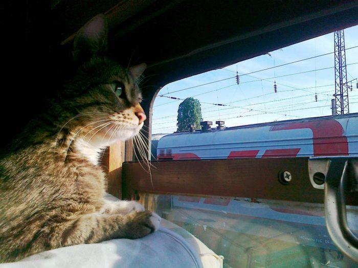 Как перевезти кота в поезде? фото