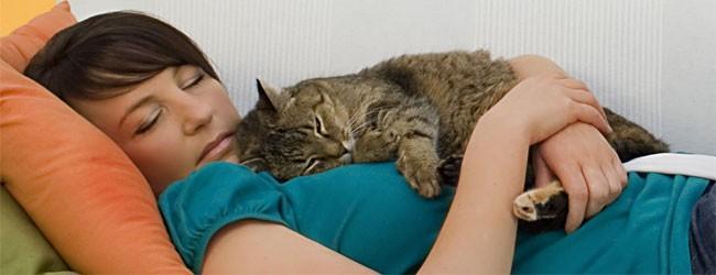 Как кошки лечат болезни? фото