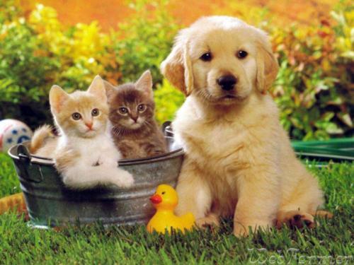 Домашние животные вдоме