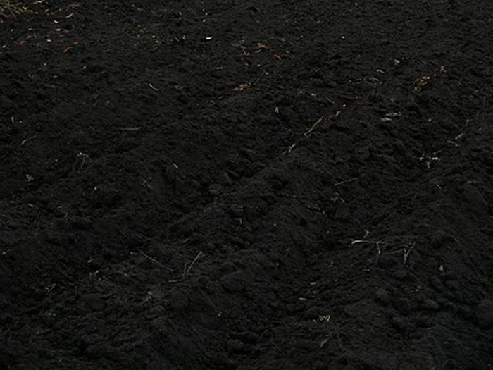 Каким бывает чернозем? фото