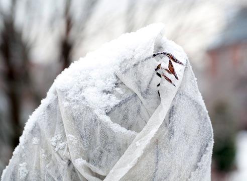 Как защитить сад от мороза? - фото