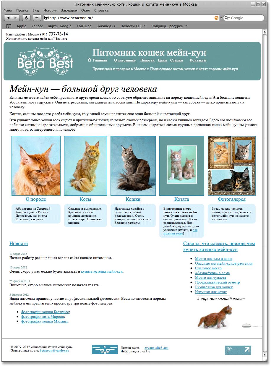 Каким должен быть сайт питомника котят? фото