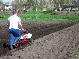 Как мотоблоком посадить картошку? фото