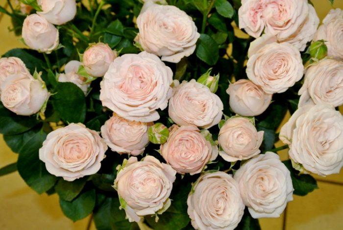 Как розы дольше простоят? фото