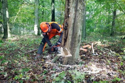 Где закзать вырубку деревьев? фото