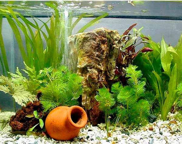 Какой аквариум выбрать начинающему? - фото