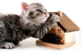 Зачем нужен домик для кошки? фото