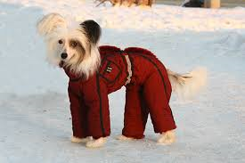 Как правильно одевать собаку зимой? фото