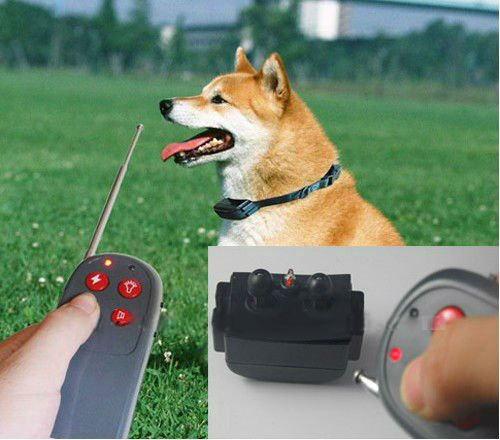 Как работает электрический ошейник для собак? - фото