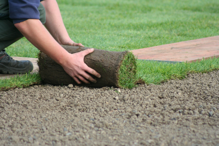 Почему стоит купить рулонный газон? фото