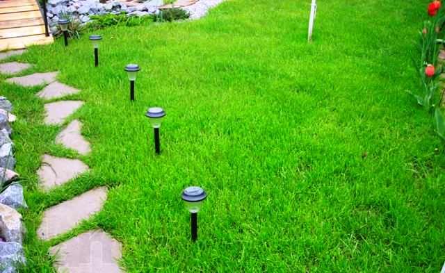 Как вырастить газонную траву на даче? фото