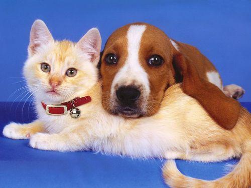 Как завести собаку, если есть кошка? фото