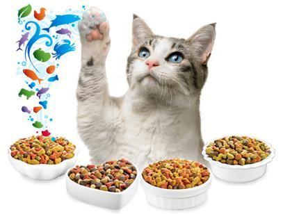 Как правильно выбирать корма для кошек? фото