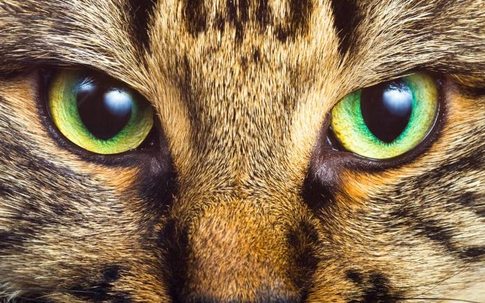 Как кошки видят наш мир? фото