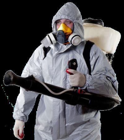 Как уничтожить насекомых в помещении? фото
