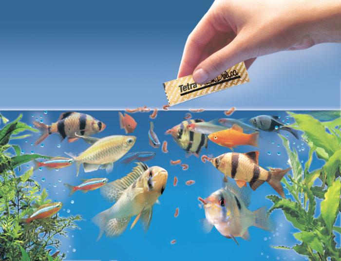 К чему снится кормить рыбу? фото