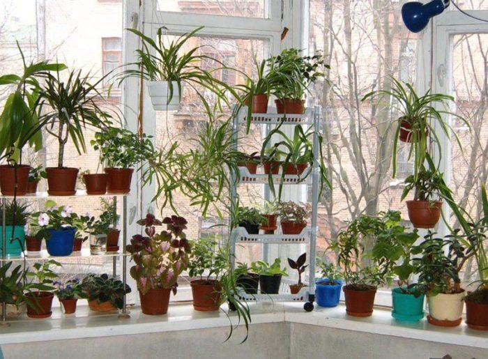Как украсить интерьер квартиры комнатными растениями? фото