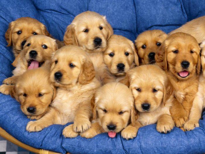 К чему снится рожающая собака? - фото