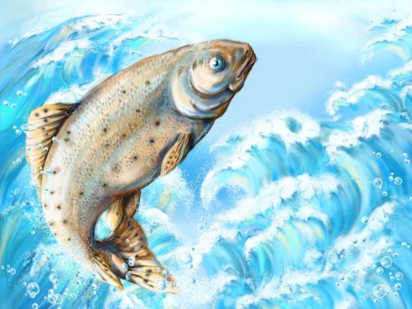 К чему снится отдавать рыбу? - фото