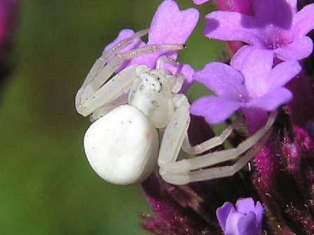 К чему снится большой белый паук? фото