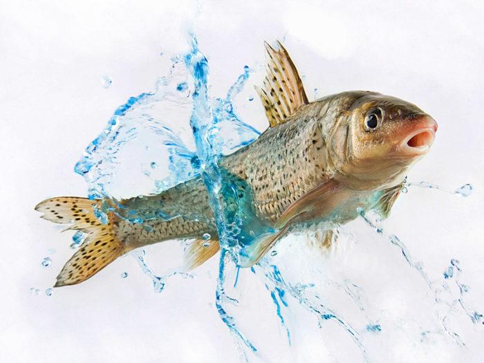 К чему снится рыба в грязной воде? фото