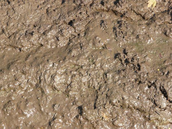 К чему снится грязь? фото