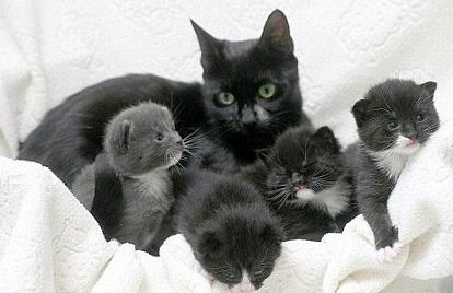 К чему снится черная кошка с котятами? - фото