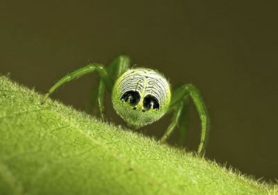К чему снится зеленый паук? - фото