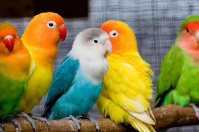 К чему снится попугай? фото